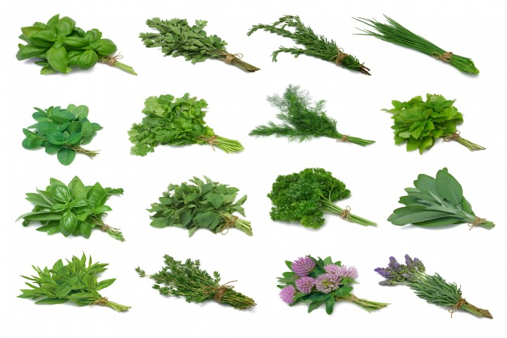 herb series sampler from top left basil marjoram rosemary chives mint cilantro dill lemon